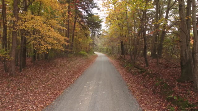Autumn Roads in November