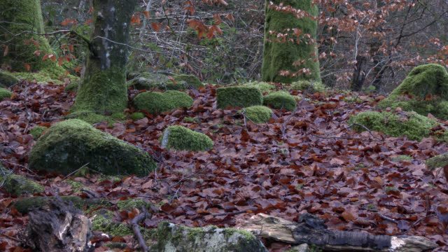 Autumn scene in Scottish woodland
