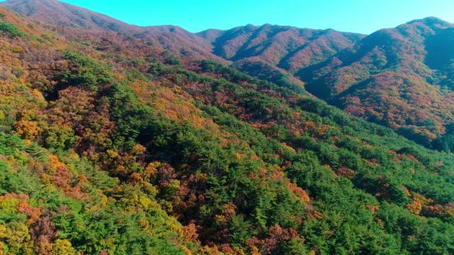 autumn scene of jogyesan mountain / suncheon-si, jeollanam-do, south korea - jeollanam do stock videos & royalty-free footage