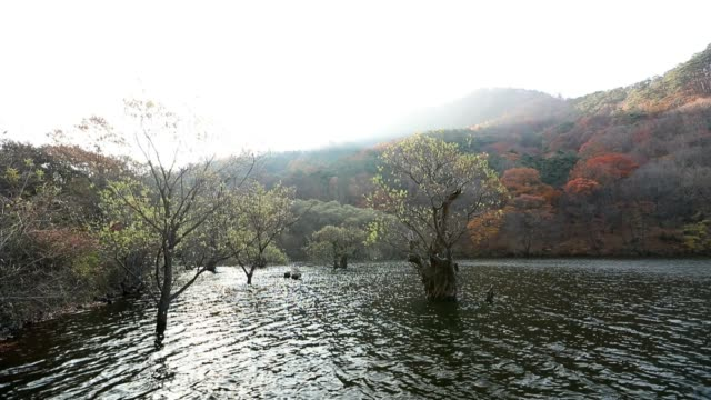 autumn scene of jusanji reservoir in juwangsan national park, cheongsong - north gyeongsang province stock videos and b-roll footage