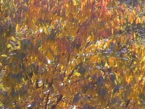 stockvideo's en b-roll-footage met autumn scenery 2 ntsc - verkoudheidsvirus