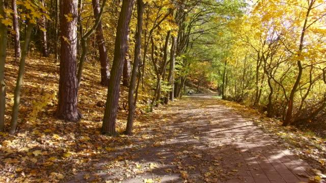 秋の歩道 alley ドリー撮影 - 懺悔点の映像素材/bロール