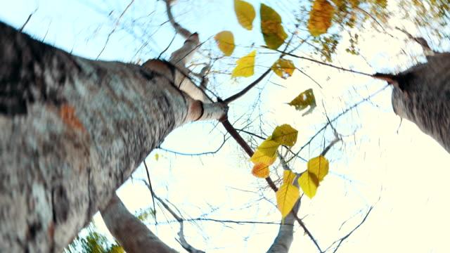 stockvideo's en b-roll-footage met 4k: herfst spinnen onder de bomen in het park - twijg