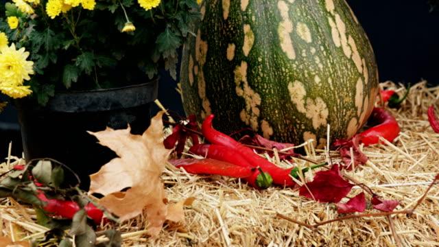 vídeos y material grabado en eventos de stock de otoño de vida - calabaza no comestible