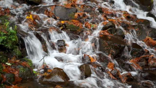autumn stream in oregon - beauty in nature stock videos & royalty-free footage