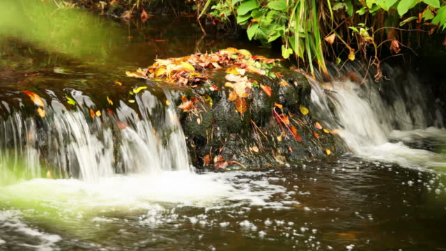 Herbst-Stream