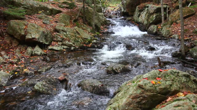 Autumn stream with Audio