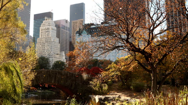 autumn sun and leaves in central park - central park manhattan stock videos & royalty-free footage