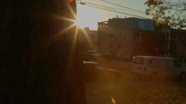 vídeos y material grabado en eventos de stock de otoño sol detrás de un árbol en el parque de la ciudad - mancha solar