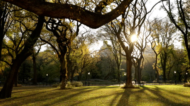 autumn sunrise in central park - central park manhattan stock videos & royalty-free footage