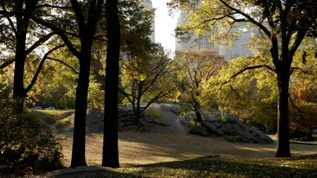 vídeos y material grabado en eventos de stock de amanecer de otoño en central park - central park