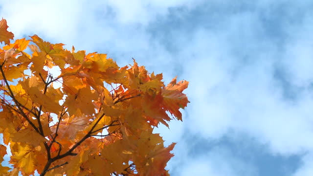 hd: autumn time - directly below stock videos & royalty-free footage