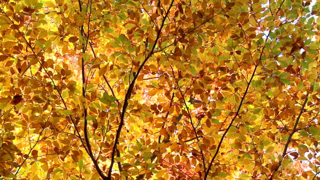 hd: autumn time - spinning point of view stock videos & royalty-free footage