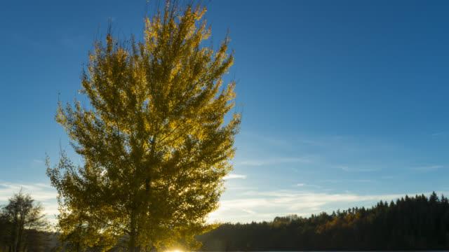 vidéos et rushes de autumn timelapse - vincent pommeyrol