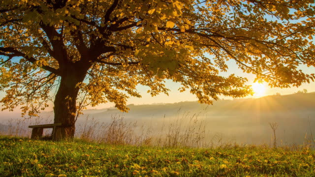t/l autumn tree at sunrise - autumn stock videos & royalty-free footage