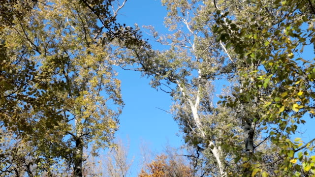 autumn tree canopies against blue sky - tree canopy stock videos & royalty-free footage
