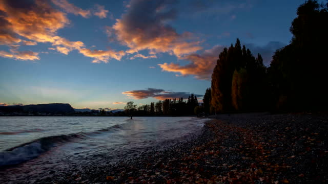 autumn tree in lake  wanaka background,new zealand - horizontal stock videos & royalty-free footage