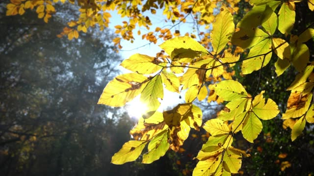 4k autumn tree leaves - swaying stock videos & royalty-free footage