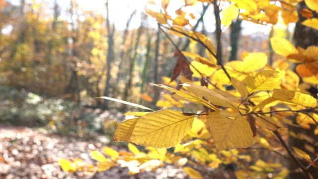 4k autumn tree leaves - branch plant part stock videos & royalty-free footage