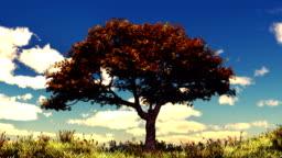 Autumn tree on sunny hill HD.