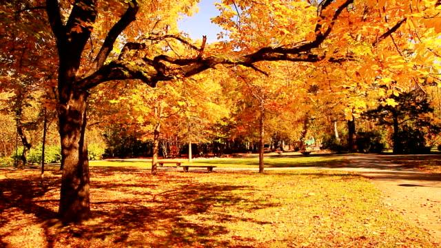 Autumn tree-HQ 1080p