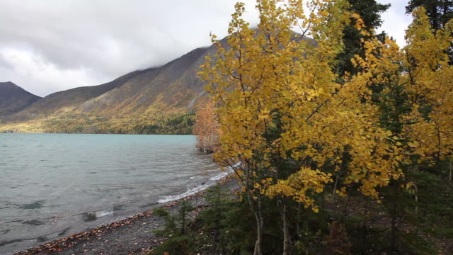 autumn trees along kenai lake,  chugach national forest, alaska. - chugach national forest stock videos & royalty-free footage