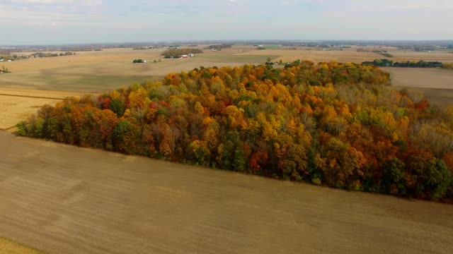 stockvideo's en b-roll-footage met autumn trees and colors in fremont ohio - ohio