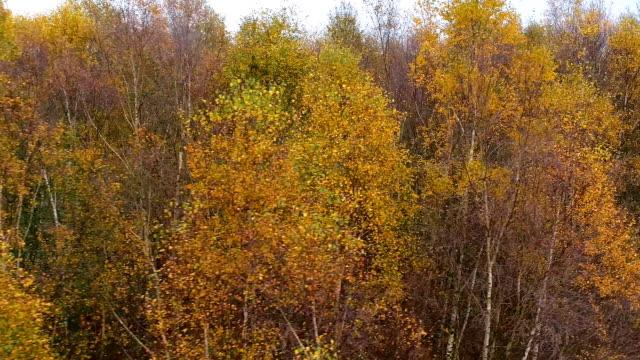 Autumn Trees by Air