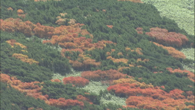 autumn trees cover the slopes of mount asahi of the daisetsuzan volcanic group in japan. - daisetsuzan volcanic group stock videos and b-roll footage
