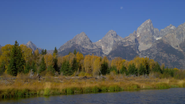 Autumn trees line the Snake River and Schwabacher's Landing in Grand Teton National Park.