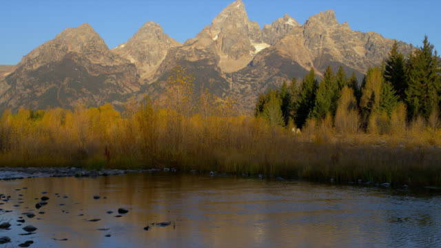 autumn trees line the snake river at schwabacher's landing, grand teton national park. - snake river stock videos and b-roll footage