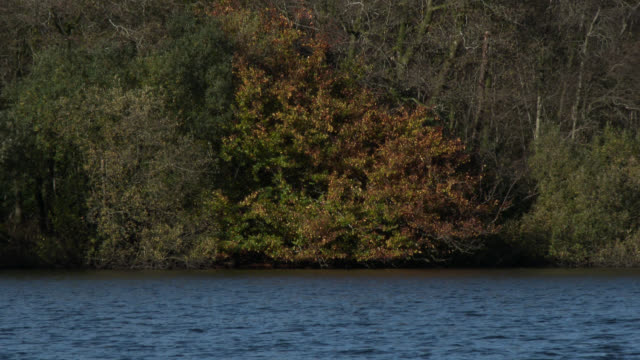 Autumn trees on the edge of a loch in south west Scotland