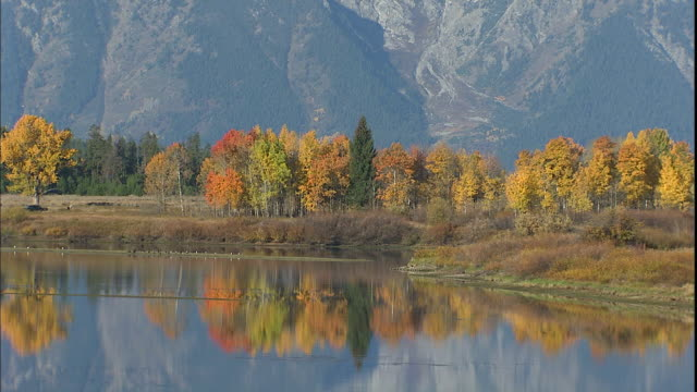 autumn trees reflect in the oxbow bend of the snake river in grand teton national park. - mt moran stock videos & royalty-free footage