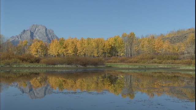 stockvideo's en b-roll-footage met autumn trees reflect in the oxbow bend of the snake river in grand teton national park. - mount moran
