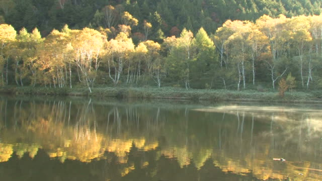 vídeos de stock, filmes e b-roll de autumn trees reflecting in calm lake - prefeitura de fukuoka