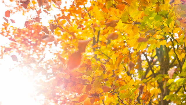 autumn - autumn leaf color stock videos and b-roll footage