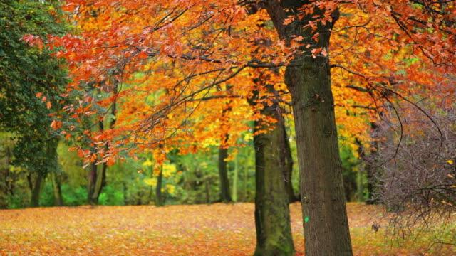 vídeos de stock e filmes b-roll de outono - tronco de árvore