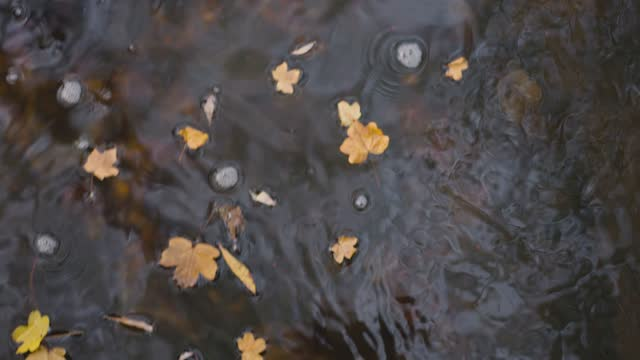 autumn - floating on water stock videos & royalty-free footage