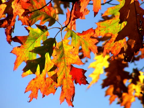 ntsc: autumn - saturated color stock videos and b-roll footage