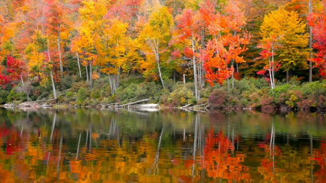 autumn - massachusetts stock videos and b-roll footage