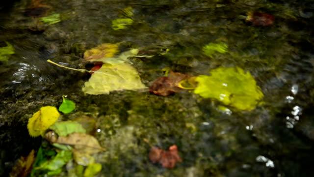 autumn. - earth goddess stock videos & royalty-free footage