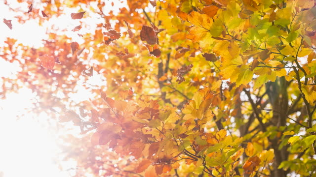 autumn - leaf stock videos & royalty-free footage