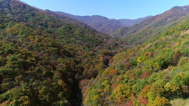 autumn view of nogodan peak and manbokdae peak with maple trees in jirisan mountain(national park) - naturwunder stock-videos und b-roll-filmmaterial