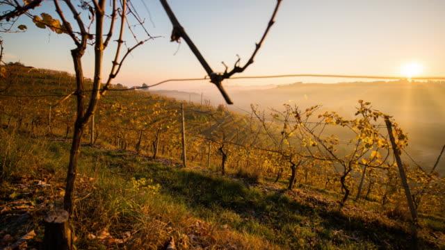 t/l 8k autumn vineyard at sunrise - prekmurje stock videos & royalty-free footage