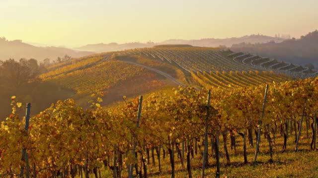DS Autumn vineyard at sunset