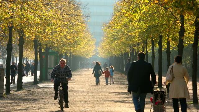 Autumn walk in sunshine