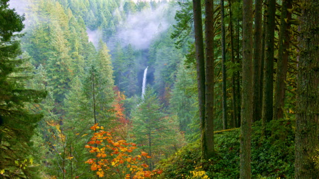 autumn waterfalls - douglas fir stock videos and b-roll footage