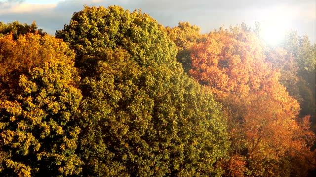 Autumn with sunlight