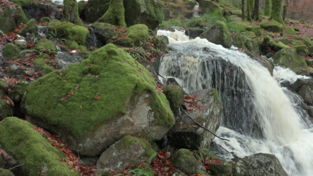 autumn woodland scene with small waterfall after a period of heavy rain in south west scotland captured by a drone - moss stock videos & royalty-free footage
