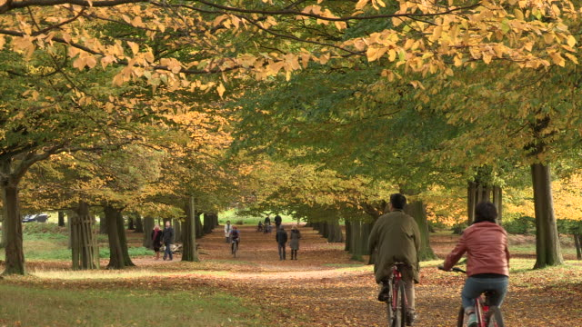 autumn woodlands - surrey england stock videos & royalty-free footage